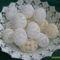 tojások 8
