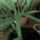 Aloe_vera_656566_42693_t