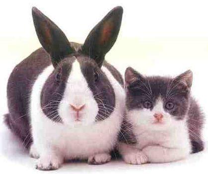 húsvét nyuszika-cica