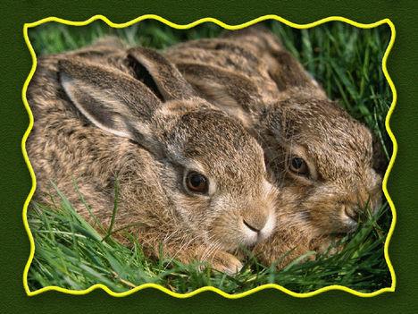Kellemes Húsvéti ünnepet minden látogatónak! 13