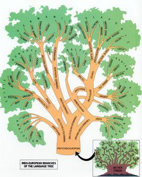Nyelvek fája 2