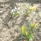 tavaszi virágok 005