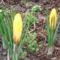 tavaszi virágok 006