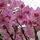 Holland virágkiállítás
