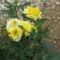 Nyári virágaim 2