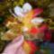 ...virágok a locsolóknak.:))