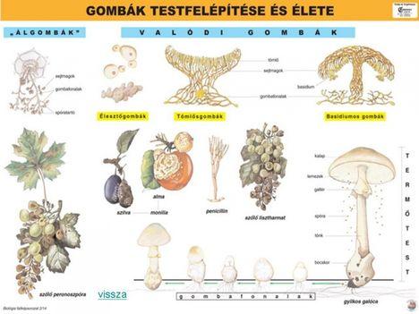 gombák 2