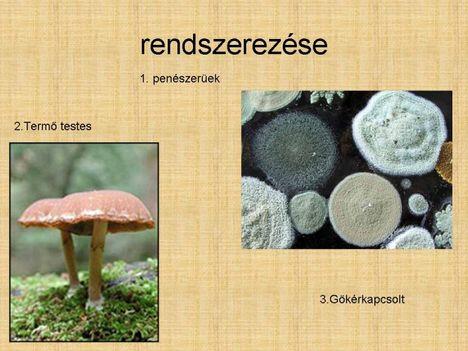 gombák 4