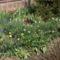 Tavasz a kiskertekben 3