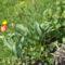 Tavasz a kiskertekben 5