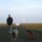 életkép: kutyák és repülés