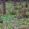 Cser-erdő virága a Salátabogárka