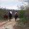 Lovas túrázók a Cser-erdőben