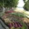 2006.07.23.:Virágba borult a Tagore sétány