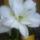 Andi virágai