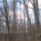 Zala_ 057_Bükkfák az ősbükkös közelében