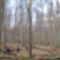 Zala_ 065_Tovább az ősbükkösben