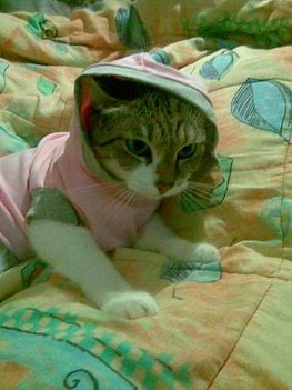 cica-pulcsiban