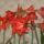 Kriszti virágai