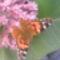 Papagály virág. Csodálatos illattal