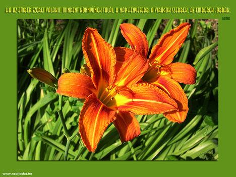 Kukorica virág