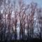 Az erdő színe