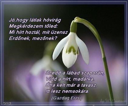 ABC sorrendben: növények Hovirag_vers_660355_34010