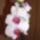 Orchidea-001_606785_15199_t