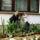 Kismenyem_onokaim_es_a_kaktuszaim_671979_80244_t