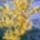 Etelka virágos kertje