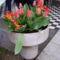Görögtál tulipánnal
