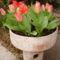 Tulipánjaimból egy görögtállal