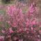 Új képek a kertböl  10