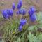 Új képek a kertböl  11