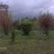 Új képek a kertböl  6