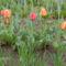 Új képek a kertböl  7
