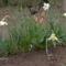 Új képek a kertböl  8