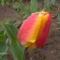 Új képek a kertböl  9
