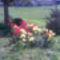 A tavasz virágai a főutcán