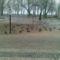 Ilyen volt a Balaton ...... 1