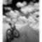 Troyek biciklis csendélete