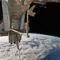 A leonardo modul kiemelése (NASA)