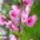 Az én kis virágos kertem.