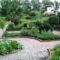 Fűszernövények a kertben 2
