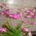 Mária orchidea csodái