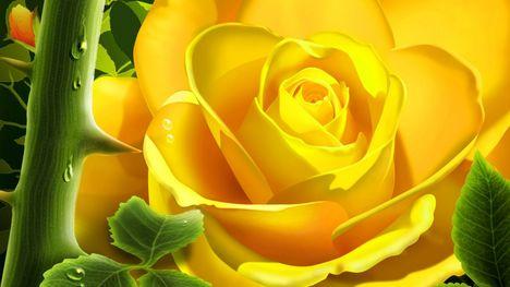3d-yellow-rose-1280-720-3611