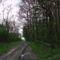A barbacsi erdő