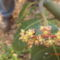 kertben hasznos bogarak...3