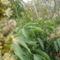 kertben hasznos bogarak 4