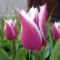 Tavasz 1